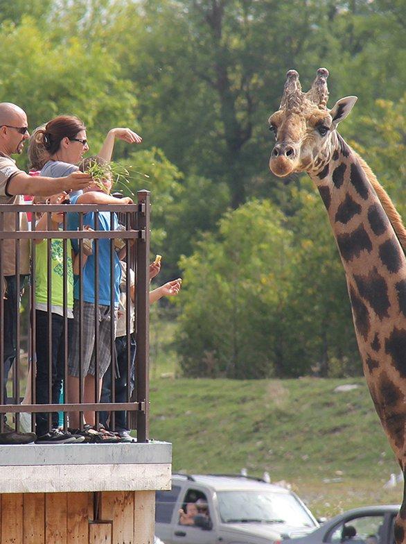Home - Le Parc Safari